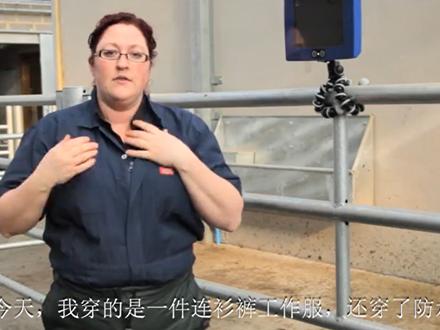 title='牛生殖系统超声波检查在线培训课程 - 4.扫描前准备工作'