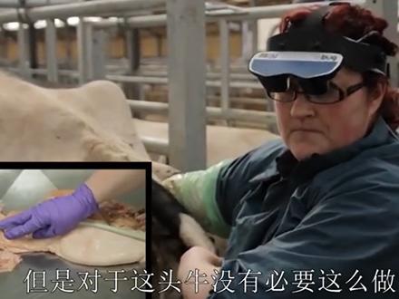 title='牛生殖系统超声波检查在线培训课程 - 7. 非怀孕母牛的超声波检查'